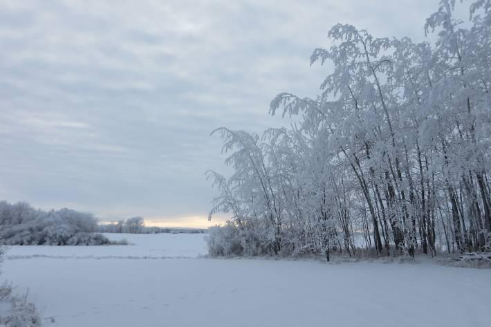 December in Manitoba. Photo courtesy of D. Ceplis.